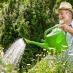 Gartenbau Servive